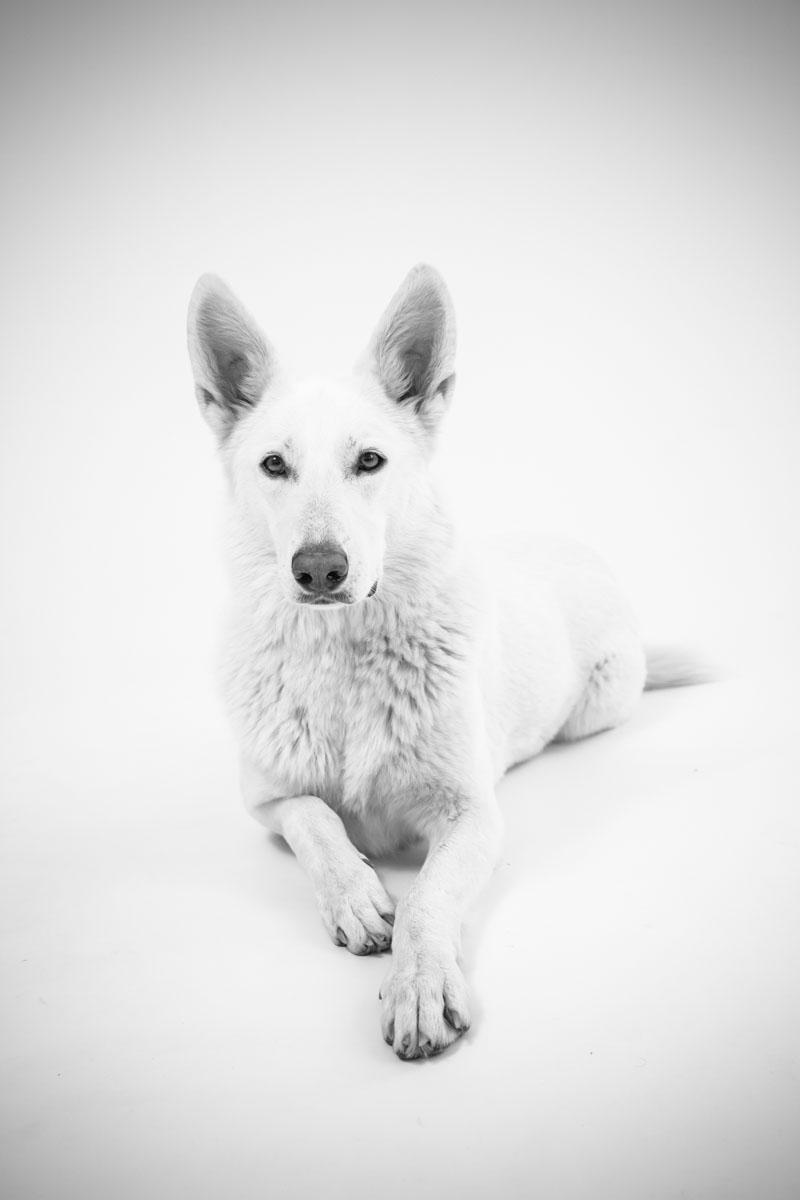 LevensFoto - hond huisdier